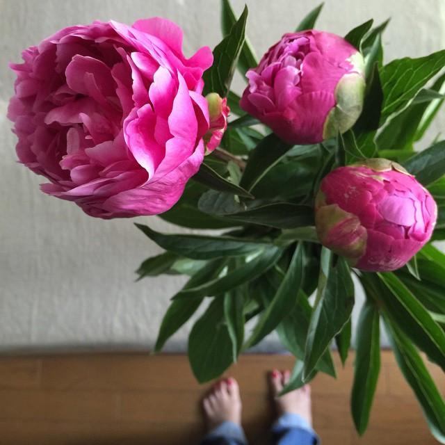満開になるのが楽しみ♡  花に癒される。  looking forward to come into bloom. beautiful flowers heal me.jpg