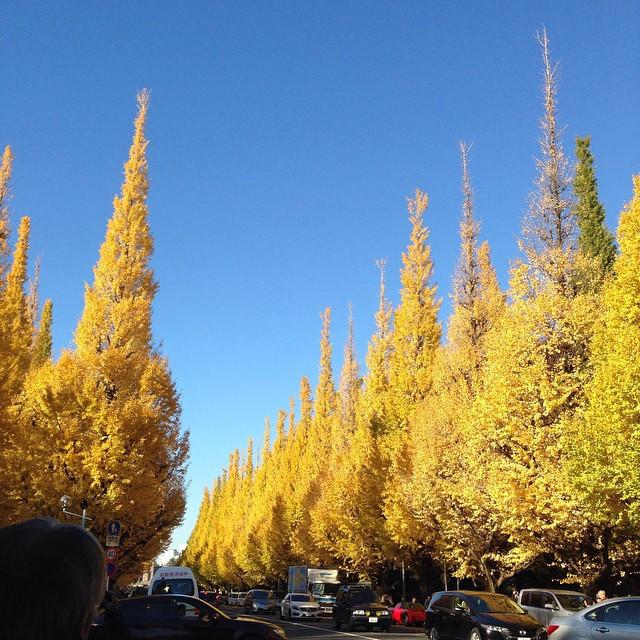 Instagram - 先日の外苑銀杏並木のつづき。 先がツンとなった形がかわいい。  pic of gingko biloba trees at Aoyama