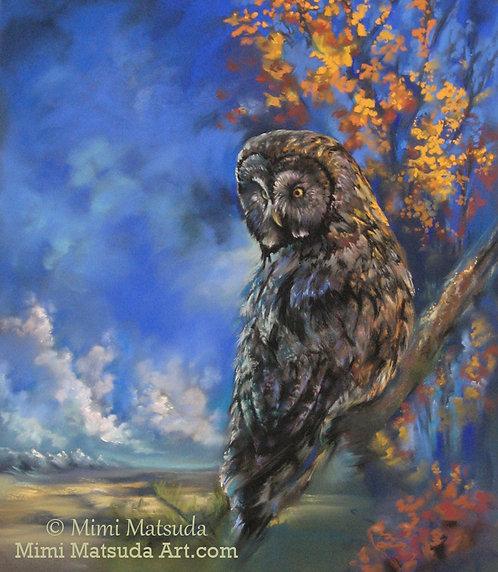 Great Gray Owl #76