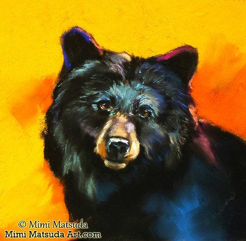 Black Bear #14B