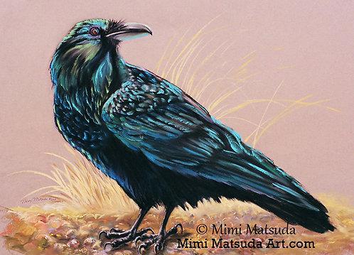 Raven #33