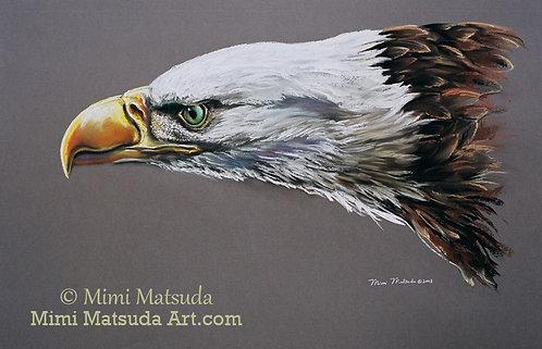 Bald Eagle #13