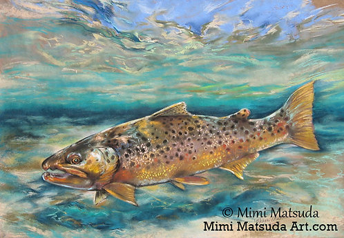Brown Trout #18