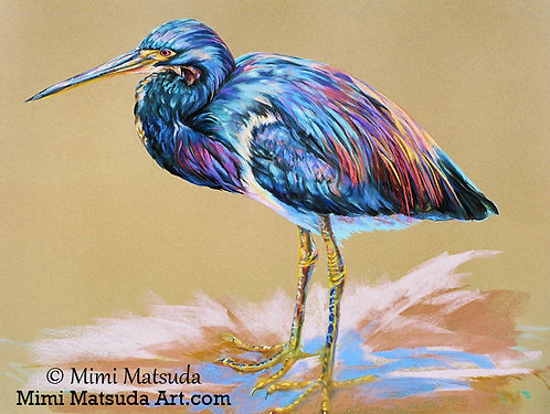 Tricolored Heron #54