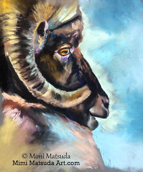 Big Horn Sheep #15BH
