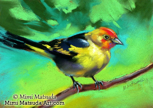 Western Tanager #14W