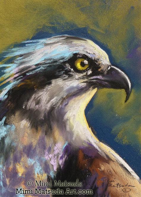 Osprey #Os4
