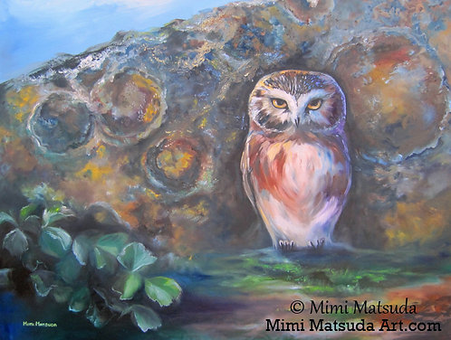 Northern Saw-whet Owl #10A