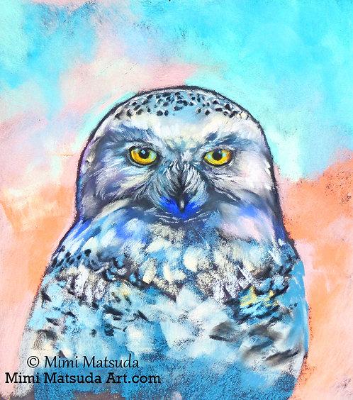 Snowy Owl #15SN