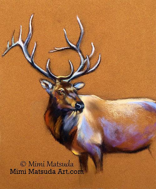 Bull Elk #BE16