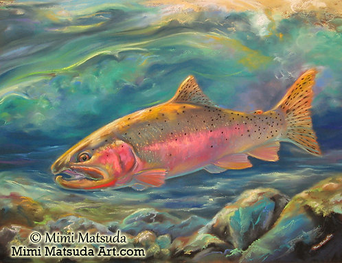 Yellowstone Cutthroat Trout #12