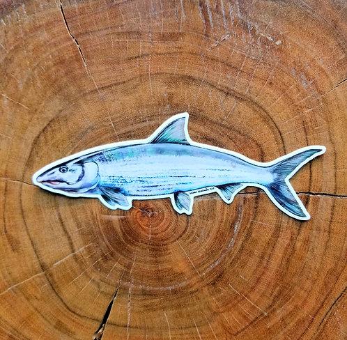 Sticker - Bonefish