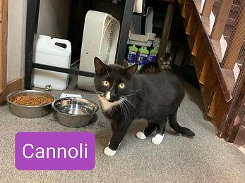Cannoli1.jpg