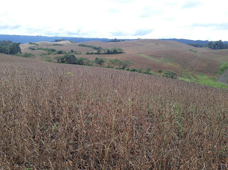 Rural | 701.80 ha  | Doutor Pedrinho | SC