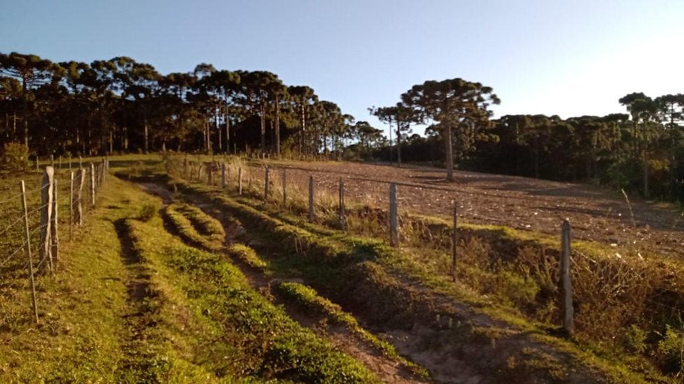 Terreno Rural 336.074,00m² | Rio Preto Velho do Sul | Mafra SC