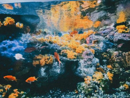 スマホで撮る江ノ島水族館