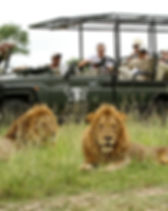 inyati-safari-game-drive-590x390.jpg