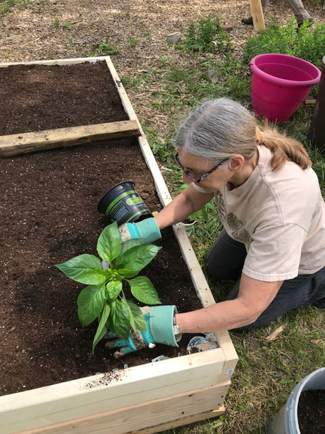 Dawn planting in her new raised bed.