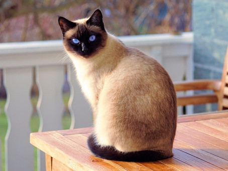 Cat sitting in Dublin