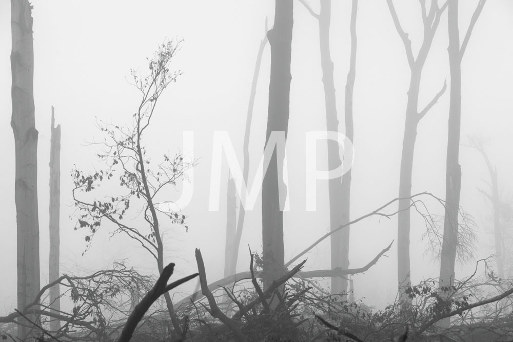 Nebel_2014_25