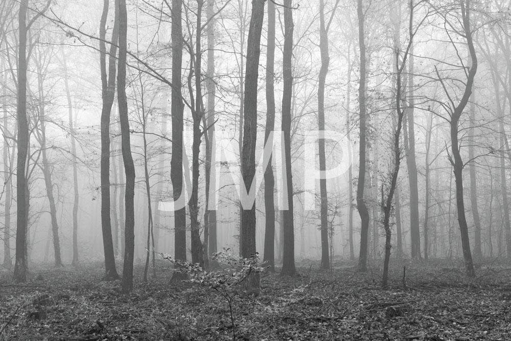 Nebel_2014_08