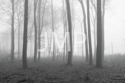 Nebel_2014_18