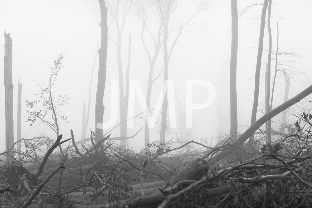 Nebel_2014_26