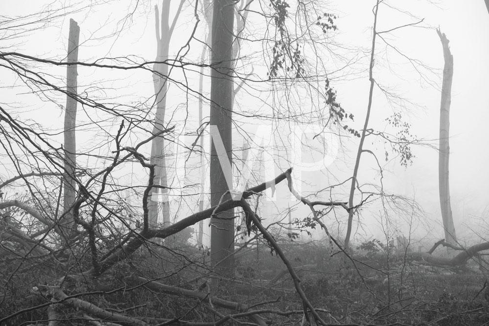 Nebel_2014_14