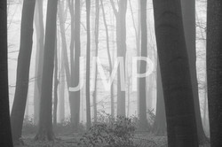 Nebel_2014_22