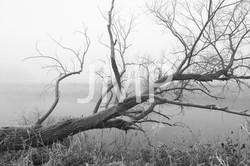 Nebel_2014_03