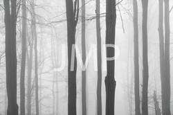 Nebel_2014_15