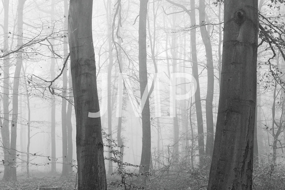 Nebel_2014_07