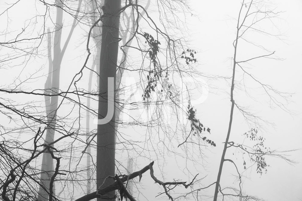 Nebel_2014_27
