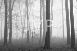 Nebel_2014_19