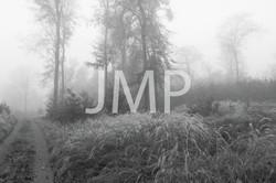 Nebel_2014_10