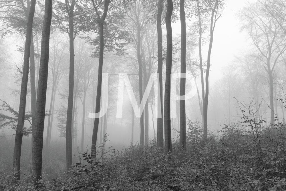Nebel_2014_09
