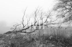 Nebel_2014_02