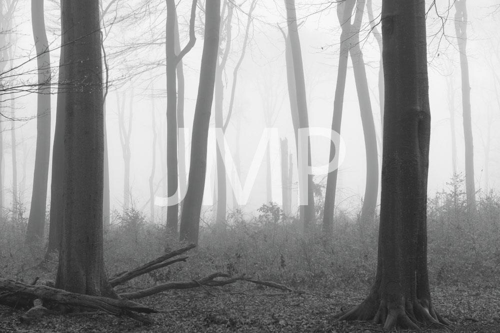 Nebel_2014_20