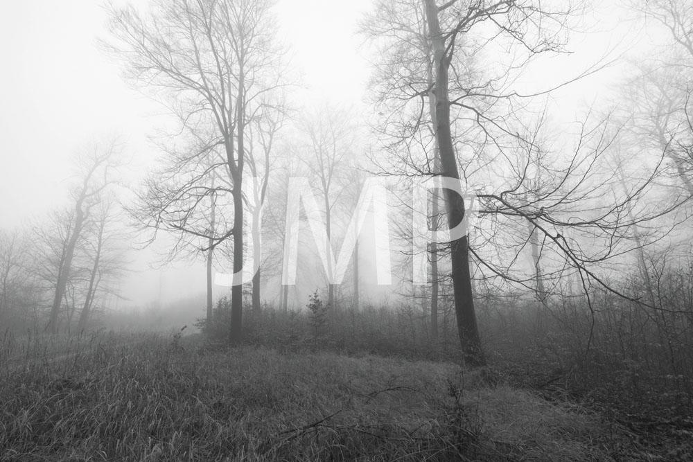 Nebel_2014_13