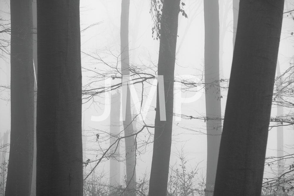 Nebel_2014_23