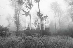 Nebel_2014_11