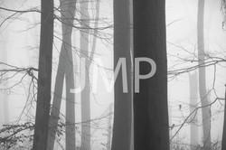 Nebel_2014_24