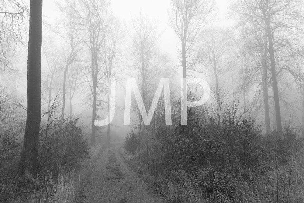 Nebel_2014_12