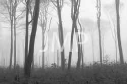 Nebel_2014_21