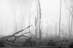 Nebel_2014_16