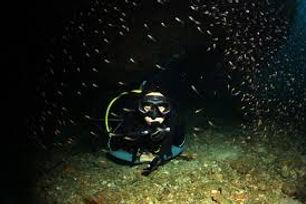 Night Diver.jpg