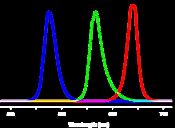 Full_Spectrum_img_2.png
