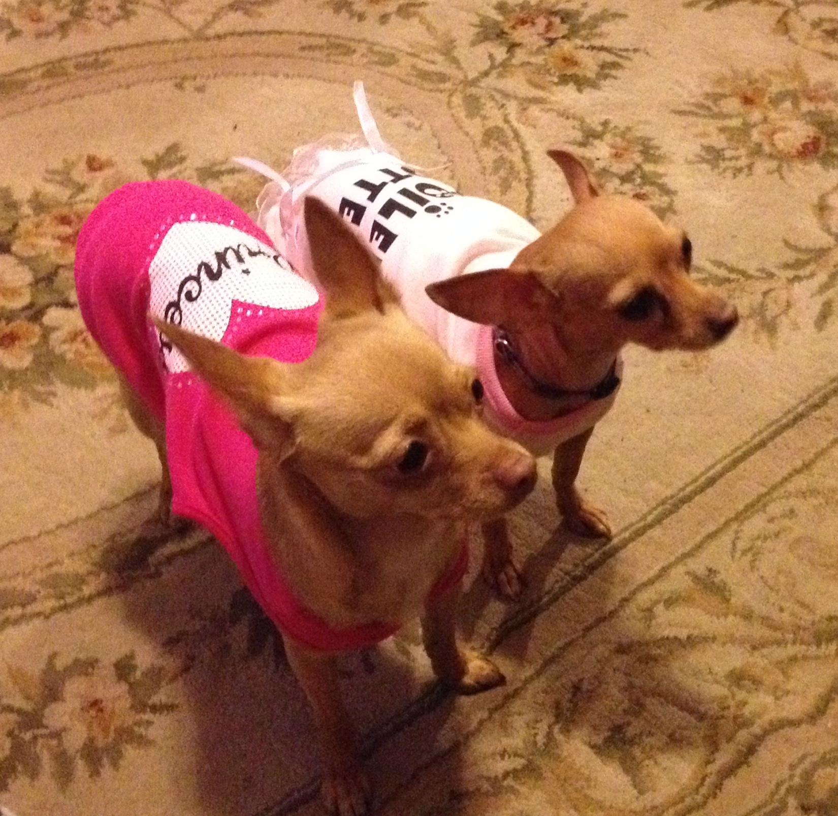Taffy and Chloe