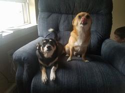 Bella and Bo