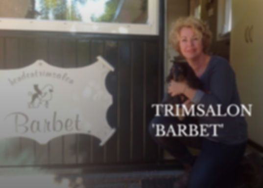 Trimsalon Barbet